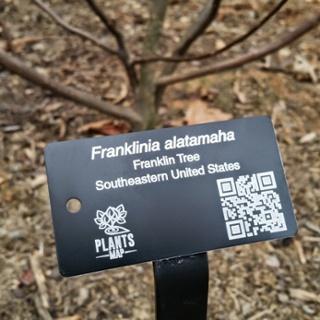 franklin_tree_640
